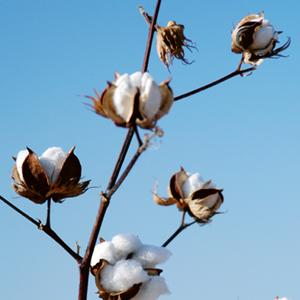 Füllmaterial Baumwolle