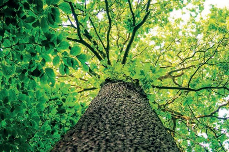 Gartenmöbel aus Robinienholz