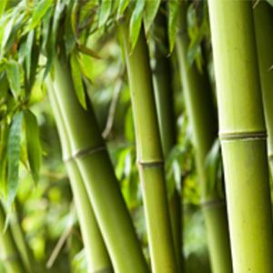 Materialbild Bambus
