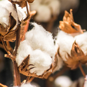Materialbild Baumwolle